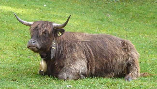 1024px Highlander nel Parco naturale Fanes Sennes e Braies