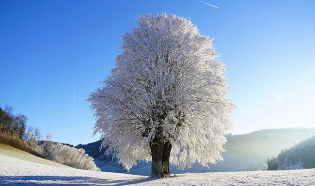 albero neve ghiaccio freddo
