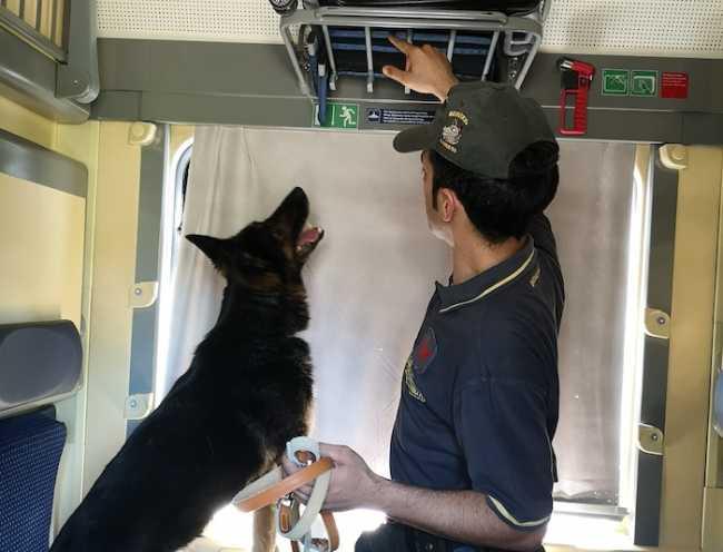 cane controllo treno