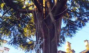 corta albero rovereto luci