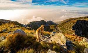 corta cane montagna panorama