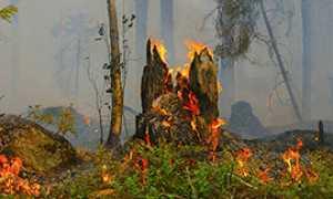 corta incendio bosco