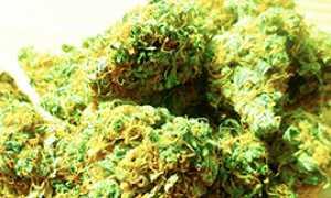 corta marjuana