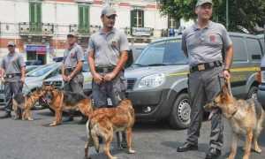 finanza unita cinofile cani