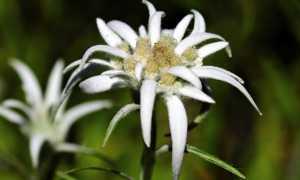 flower 2399639 640