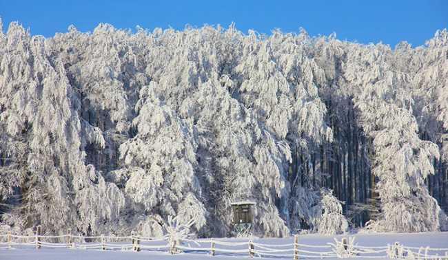 pineta neve inverno