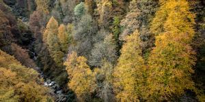 Treno_del_Foliage_-_Ferrovia_Vigezzina-Centovalli_-_ph._Giovanni_Tagini_5.jpg