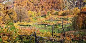 Vigezzina-Foliage_10.jpg