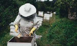 apiary 1866740 640