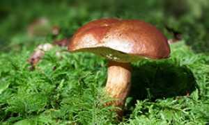 corta fungo